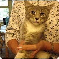 Adopt A Pet :: Eddy - Riverside, RI