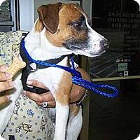 Adopt A Pet :: Timmy in Houston - Houston, TX