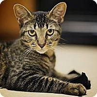 Adopt A Pet :: Oslo FOSTER NEEDED - Lafayette, CA