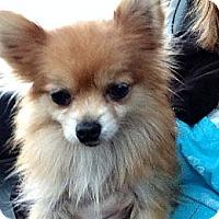 Adopt A Pet :: KoKo - Poulsob, WA