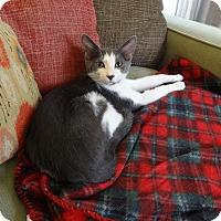 Adopt A Pet :: DUSTY - Diamond Bar, CA