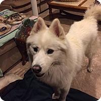 Adopt A Pet :: FROSTY - Mahopac, NY