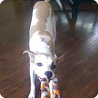Adopt A Pet :: Picasso - Pasadena, CA