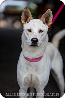 Shepherd (Unknown Type) Mix Dog for adoption in Mantua, New Jersey - Daisey