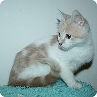 Adopt A Pet :: Peppermint - Santa Rosa, CA