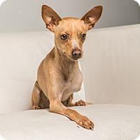 Adopt A Pet :: Bambi - Inglewood, CA