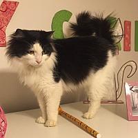 Adopt A Pet :: Trinity - Monroe, GA