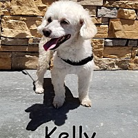 Adopt A Pet :: Kelly - Upland, CA
