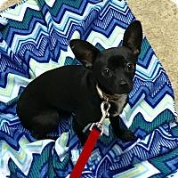 Adopt A Pet :: Petri - Jasper, TN