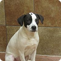 Adopt A Pet :: Petal *Petsmart GB* - Appleton, WI