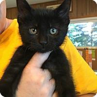 Adopt A Pet :: Leo-adoption pending - Hanna City, IL