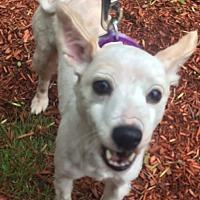 Adopt A Pet :: Polly - Oak Ridge, NJ