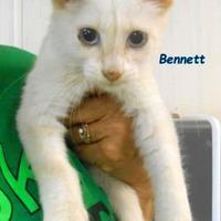 Adopt A Pet :: Bennett - Oskaloosa, IA