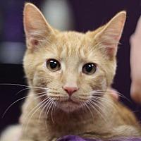 Adopt A Pet :: Firefly II - Raleigh, NC