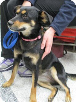 Terrier (Unknown Type, Medium) Mix Dog for adoption in Humble, Texas - Petal