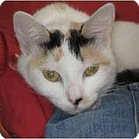 Adopt A Pet :: Roxanne - Davis, CA