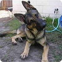 Adopt A Pet :: Magnum - Green Cove Springs, FL