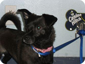 Chihuahua Mix Dog for adoption in Fort Lupton, Colorado - Estella