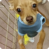 Adopt A Pet :: Macho - Phoenix, AZ
