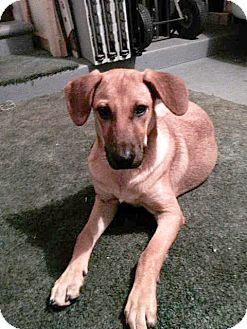 Shepherd (Unknown Type) Mix Dog for adoption in Sterling Heights, Michigan - Kylie