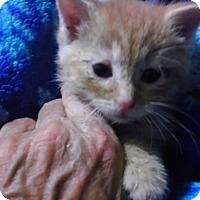 Adopt A Pet :: Rusty - Columbus, OH