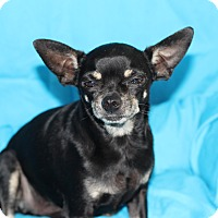 Adopt A Pet :: Jake - Kempner, TX