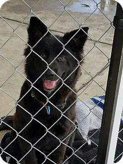 Retriever (Unknown Type) Mix Dog for adoption in Gustine, California - BUDDY