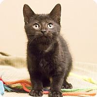 Adopt A Pet :: Suzie Jett - Chicago, IL