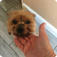 Adopt A Pet :: Chico - Fremont, CA