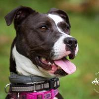 Adopt A Pet :: Nala (June) - Salem, NH