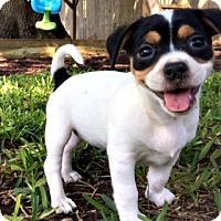 Adopt A Pet :: Juniper - Grapevine, TX