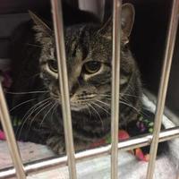 Adopt A Pet :: Kiera - Manitowoc, WI
