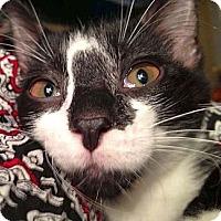 Adopt A Pet :: Tibbers - Green Bay, WI