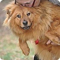 Adopt A Pet :: Buster - York, SC