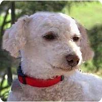 Adopt A Pet :: KC - La Costa, CA