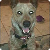 Adopt A Pet :: Doc Holiday - Phoenix, AZ