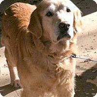 Adopt A Pet :: Gloria - New Canaan, CT