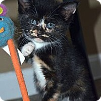 Adopt A Pet :: Nina - Xenia, OH