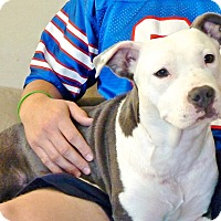 Adopt A Pet :: Phat Mama - Reisterstown, MD