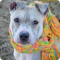 Adopt A Pet :: Janis - East Rockaway, NY