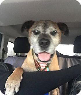 Boxer/Shepherd (Unknown Type) Mix Dog for adoption in Birmingham, Michigan - MARTY- PENDING ADOPTION
