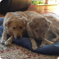 Adopt A Pet :: Moxie and Mojo - New Canaan, CT