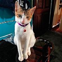 Adopt A Pet :: Tia - Arlington, VA