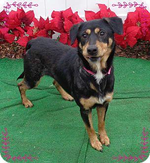 Rottweiler/Hound (Unknown Type) Mix Dog for adoption in Marietta, Georgia - LUCY