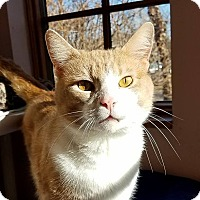 Adopt A Pet :: Rudy - Ann Arbor, MI