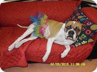 American Bulldog Mix Dog for adoption in Missouri City, Texas - Anastasia