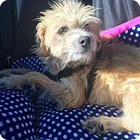 Adopt A Pet :: Eva Delores, What a BEAUTY!~ - Corona, CA