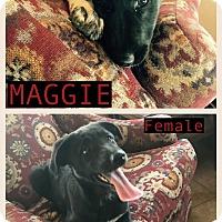 Adopt A Pet :: Maggie-pending adoption - East Hartford, CT
