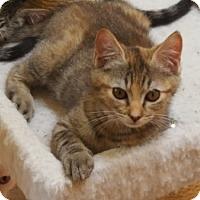 Adopt A Pet :: Punkin - Spring, TX