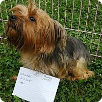 Adopt A Pet :: Wasabi - Crump, TN